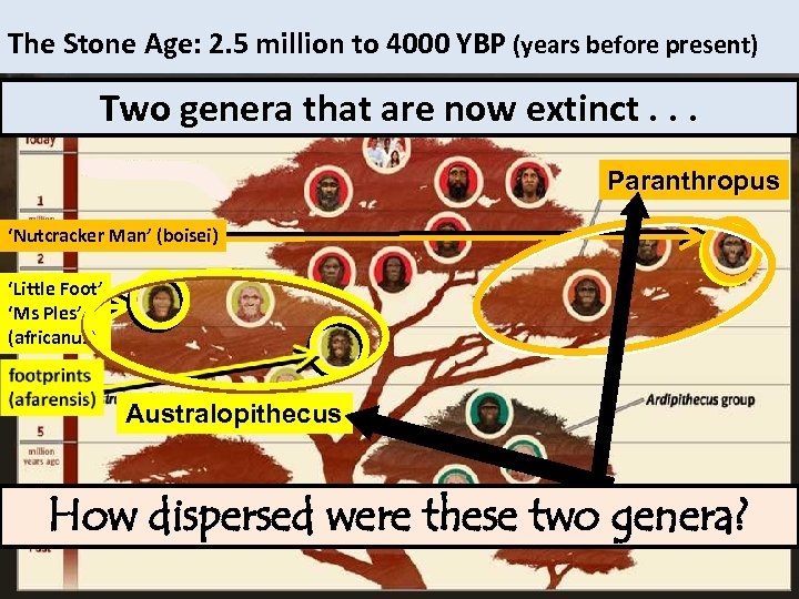 The Stone Age: 2. 5 million to 4000 YBP (years before present) homo Two