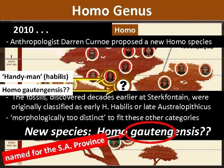 Homo Genus 2010. . . homo Homo - Anthropologist Darren Curnoe proposed a new