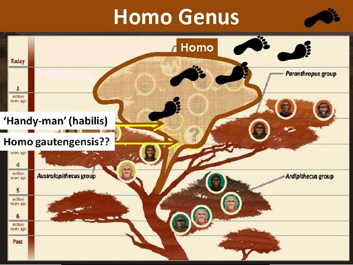 Homo Genus The Stone Age: 2. 5 million to 4000 YBP (years before present)