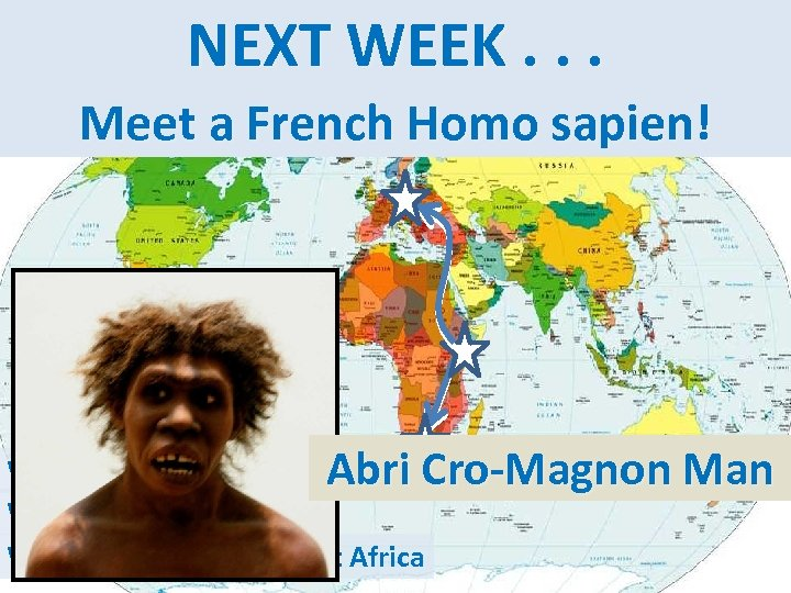 Homo Genus NEXT WEEK. . . EUROPE AFRICA sapien ASIA AMER. Meet a French
