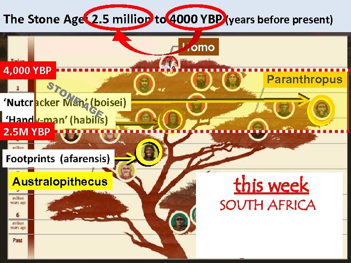 The Stone Age: 2. 5 million to 4000 YBP (years before present) homo Homo