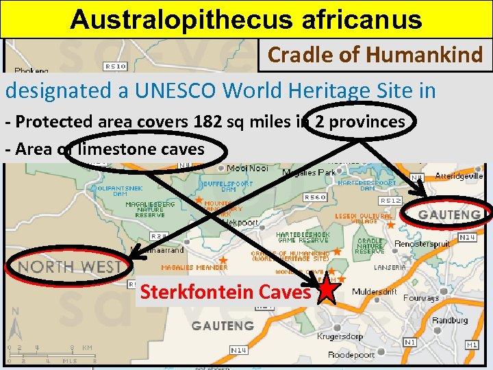 Australopithecus africanus Cradle of Humankind designated a UNESCO World Heritage Site in 1999 -