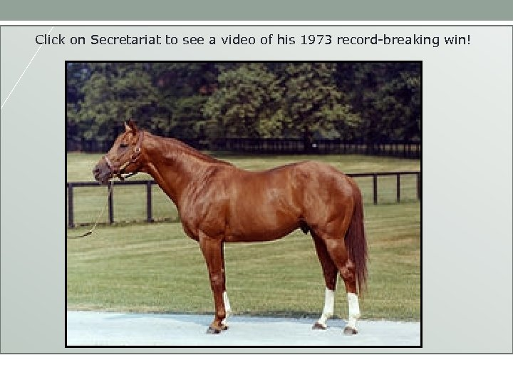 Which horse will win? Click on Secretariat to see a video of his 1973