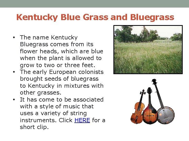 Kentucky Blue Grass and Bluegrass • The name Kentucky Bluegrass comes from its flower