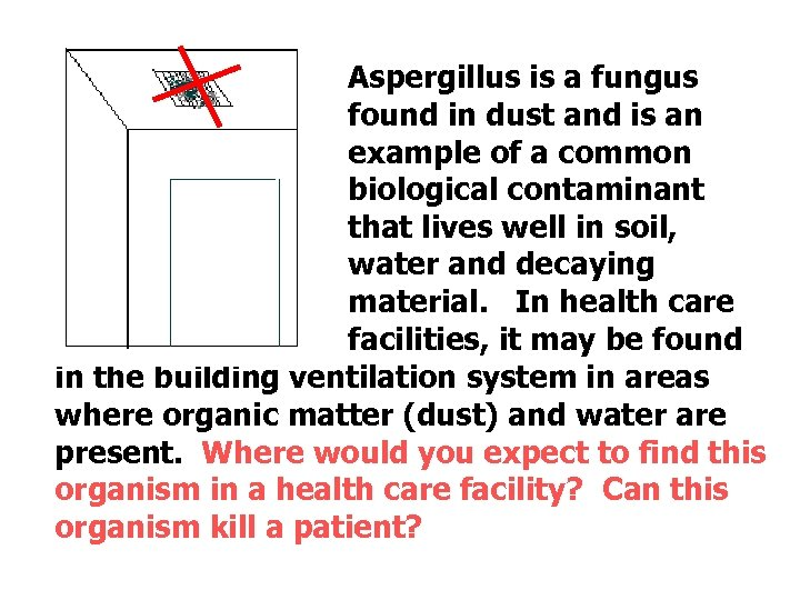 Aspergillus is a fungus found in dust and is an example of a common