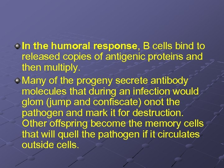 In the humoral response, B cells bind to released copies of antigenic proteins and
