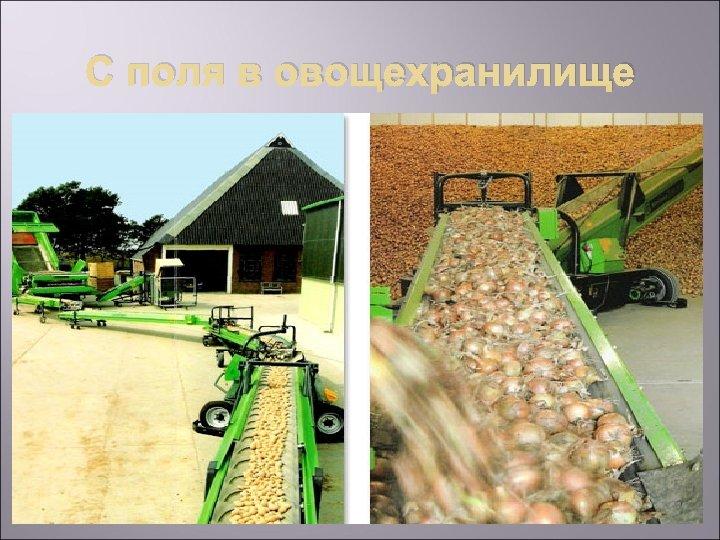 С поля в овощехранилище
