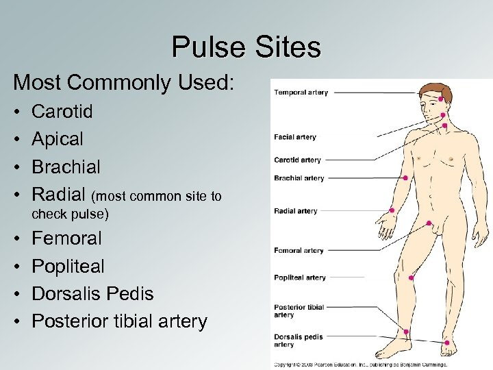 Pulse Sites Most Commonly Used: • • Carotid Apical Brachial Radial (most common site