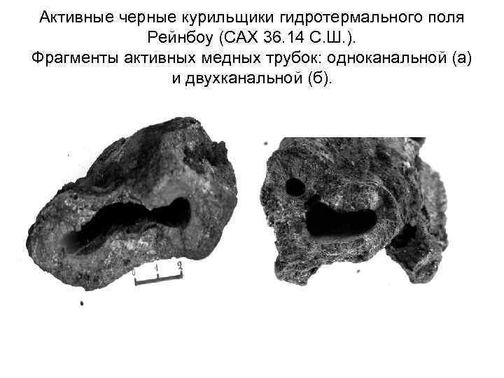 Активные черные курильщики гидротермального поля Рейнбоу (САХ 36. 14 С. Ш. ). Фрагменты активных