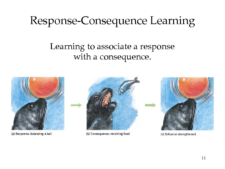 Response-Consequence Learning to associate a response with a consequence. 11