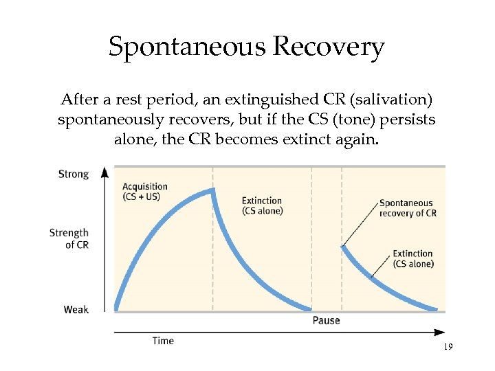 Spontaneous Recovery After a rest period, an extinguished CR (salivation) spontaneously recovers, but if