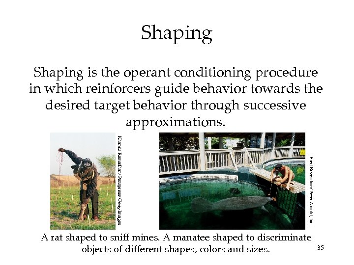 Shaping is the operant conditioning procedure in which reinforcers guide behavior towards the desired