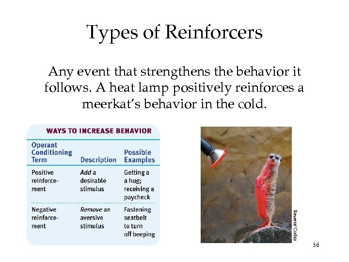 Types of Reinforcers Any event that strengthens the behavior it follows. A heat lamp