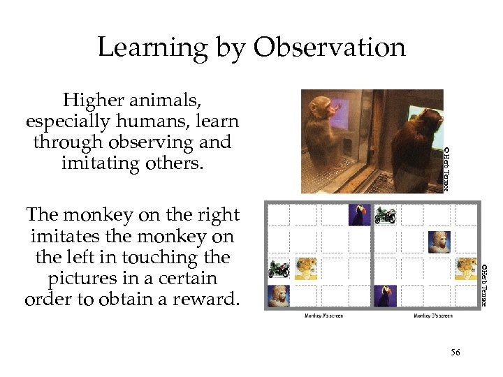 Learning by Observation © Herb Terrace Higher animals, especially humans, learn through observing and