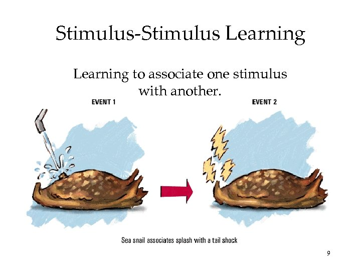 Stimulus-Stimulus Learning to associate one stimulus with another. 9
