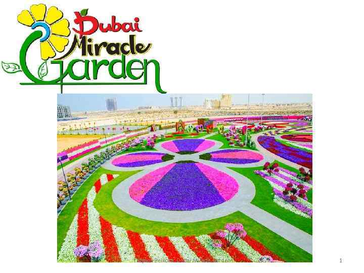 Tatyana Belkova. Dubai Miracle Garden 1