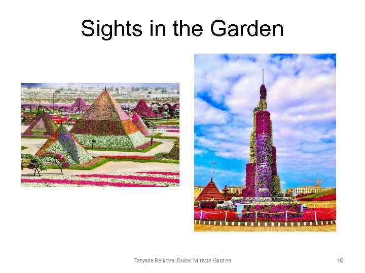 Sights in the Garden Tatyana Belkova. Dubai Miracle Garden 10