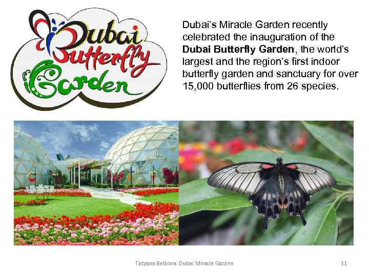 Dubai's Miracle Garden recently celebrated the inauguration of the Dubai Butterfly Garden, the world's