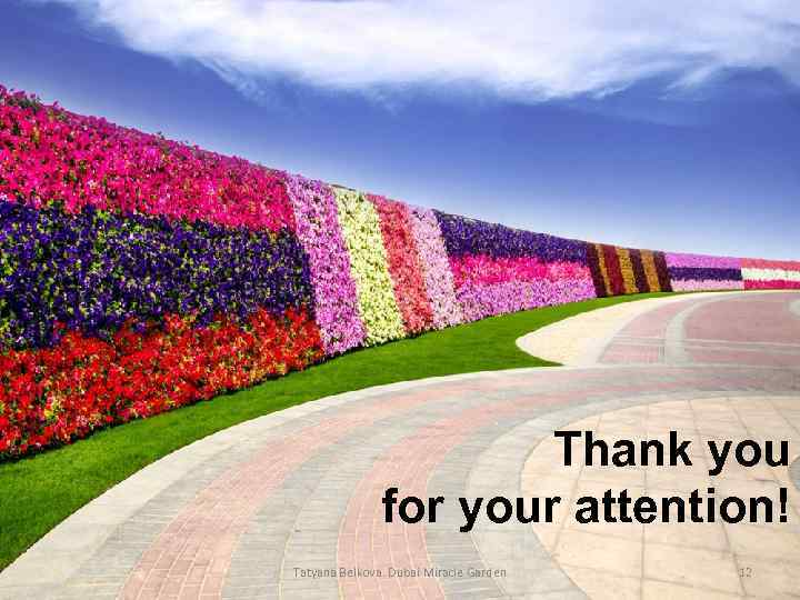 Thank you for your attention! Tatyana Belkova. Dubai Miracle Garden 12