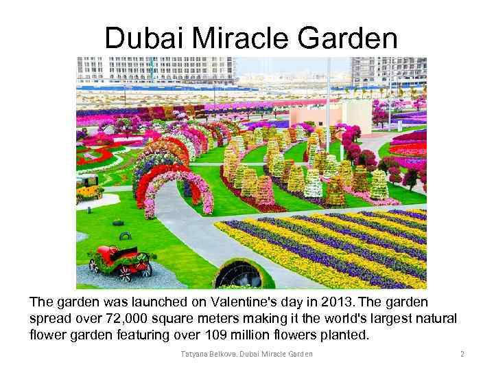 Dubai Miracle Garden The garden was launched on Valentine's day in 2013. The garden