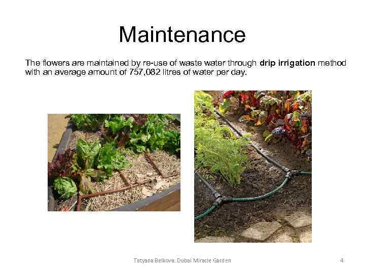 Maintenance The flowers are maintained by re-use of waste water through drip irrigation method