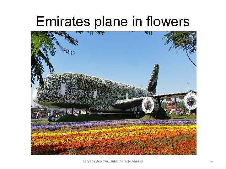 Emirates plane in flowers Tatyana Belkova. Dubai Miracle Garden 8