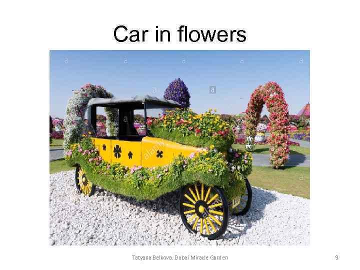 Car in flowers Tatyana Belkova. Dubai Miracle Garden 9