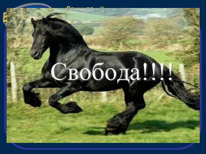 Семинар «Открытие» Свобода!!!!