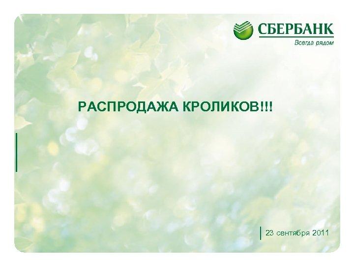 РАСПРОДАЖА КРОЛИКОВ!!! 23 сентября 2011 1