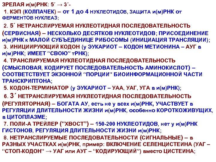 ЗРЕЛАЯ и(м)РНК: 5΄ → 3΄1. КЭП (КОЛПАЧЕК) – от 1 до 4 НУКЛЕОТИДОВ, ЗАЩИТА