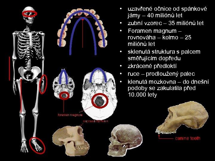 • uzavřené očnice od spánkové jámy – 40 miliónů let • zubní vzorec