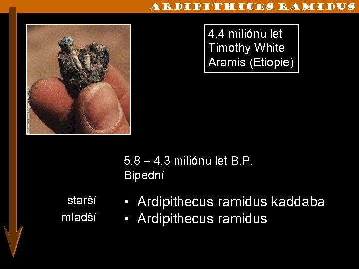ARdipithices ramidus 4, 4 miliónů let Timothy White Aramis (Etiopie) 5, 8 – 4,
