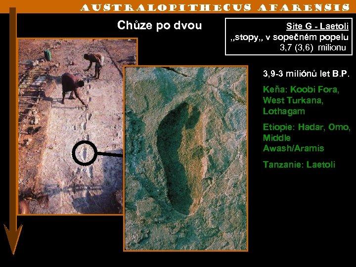 "Australopithecus afarensis Chůze po dvou Site G - Laetoli ""stopy"" v sopečném popelu 3,"
