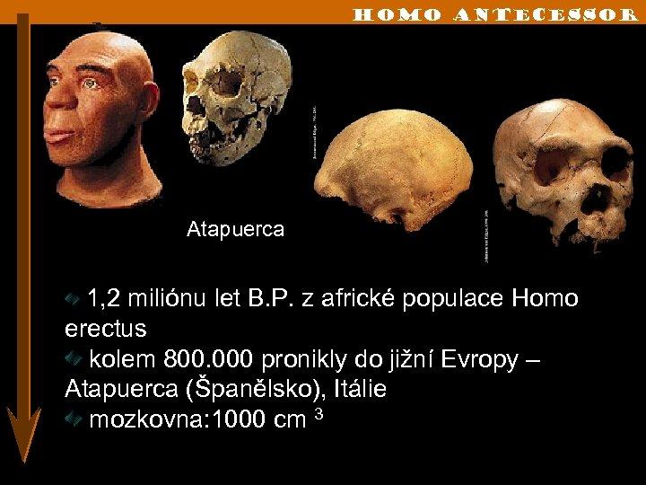 Homo Antecessor Atapuerca 1, 2 miliónu let B. P. z africké populace Homo erectus