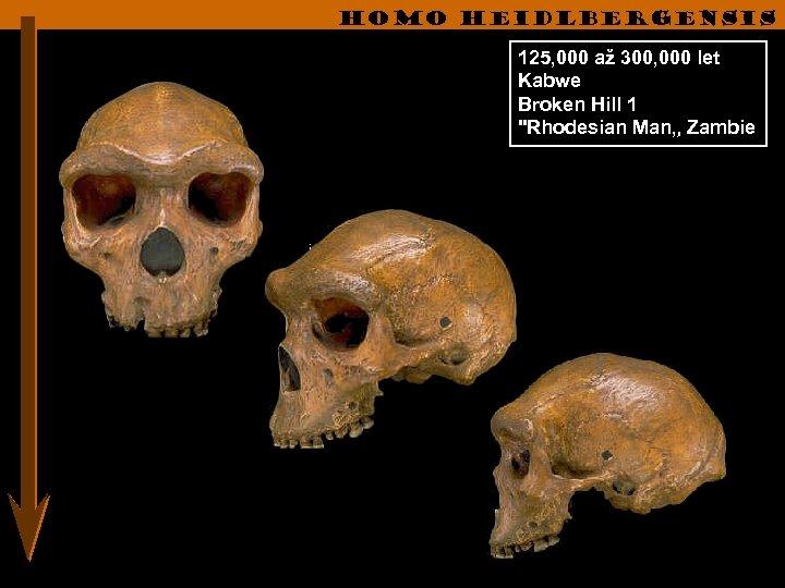Homo heidlbergensis 125, 000 až 300, 000 let Kabwe Broken Hill 1
