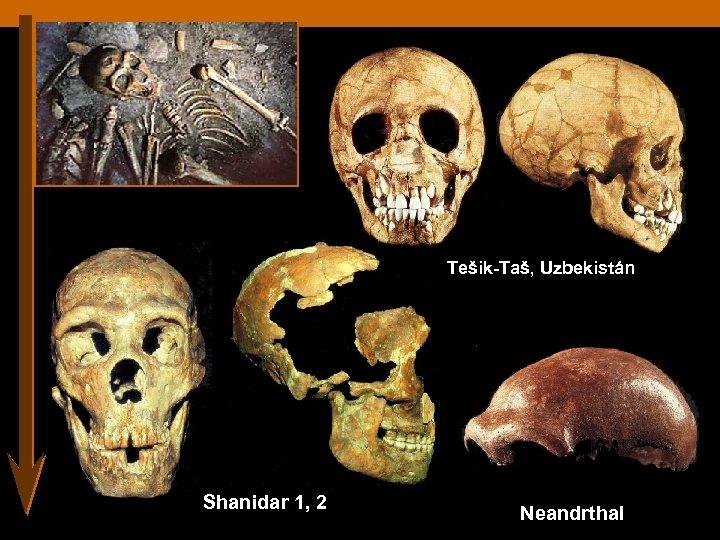 Tešik-Taš, Uzbekistán Shanidar 1, 2 Neandrthal
