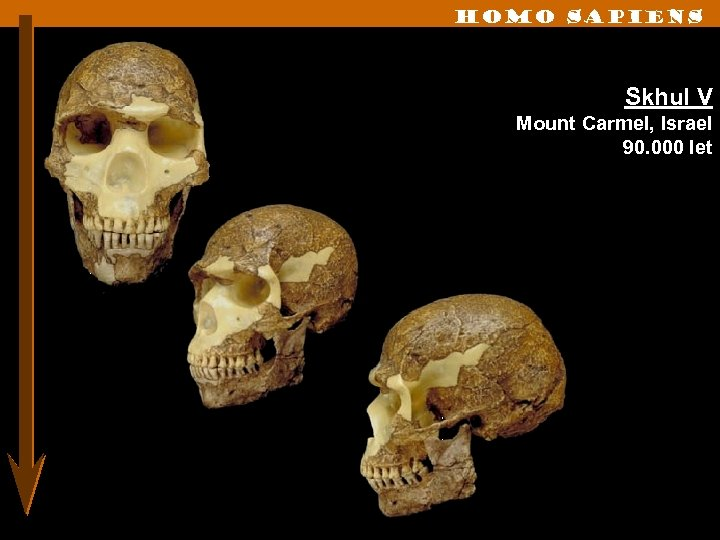 Homo sapiens Skhul V Mount Carmel, Israel 90. 000 let