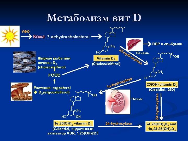 Метаболизм вит D УФО Кожа: 7 -dehydrocholesterol CH 2 HO DBP и альбумин 25