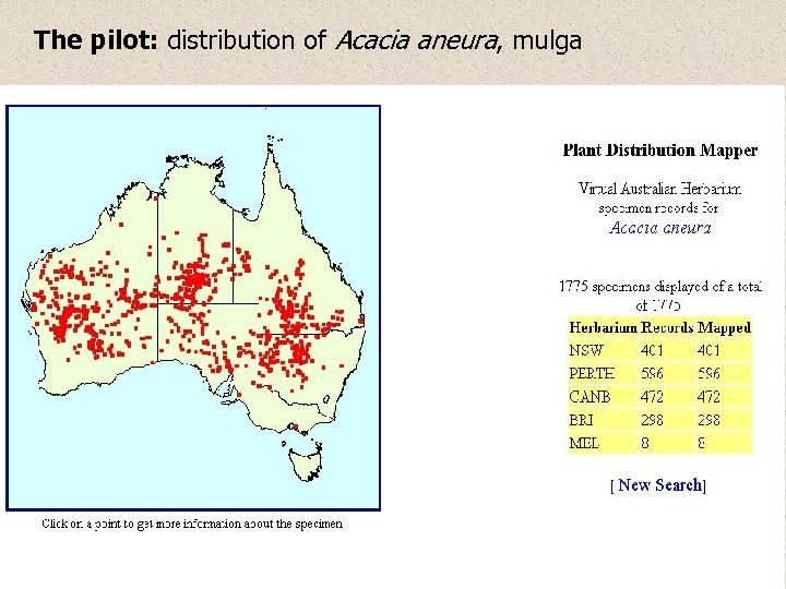 The pilot: distribution of Acacia aneura, mulga