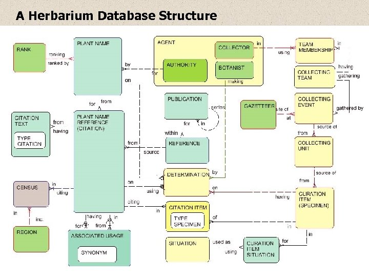 A Herbarium Database Structure