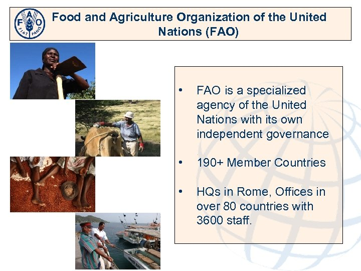 Food and Agriculture Organization of the United Nations (FAO) • FAO is a specialized