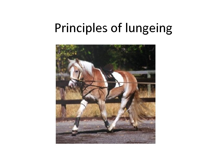 Principles of lungeing