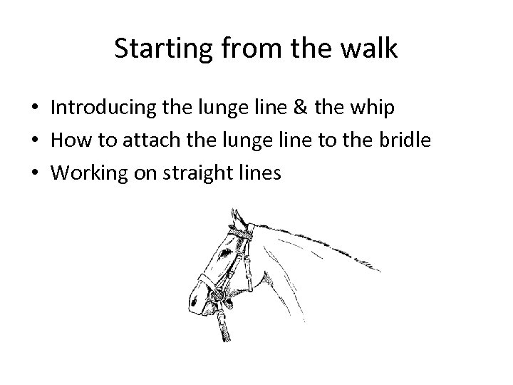 Starting from the walk • Introducing the lunge line & the whip • How