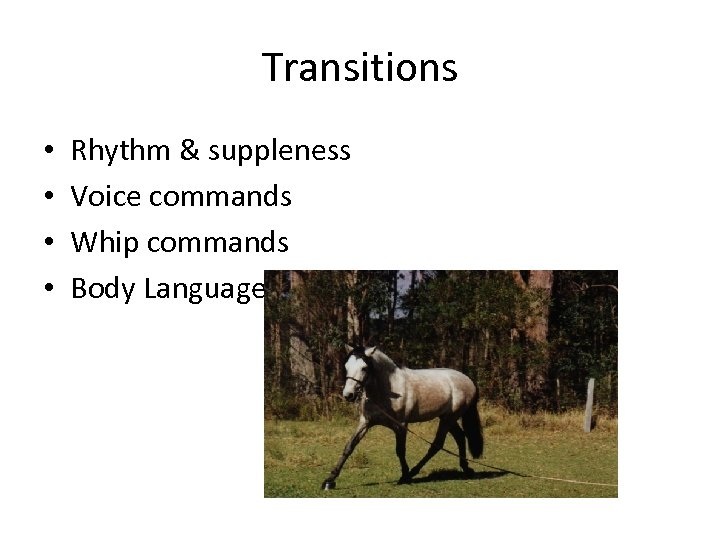 Transitions • • Rhythm & suppleness Voice commands Whip commands Body Language