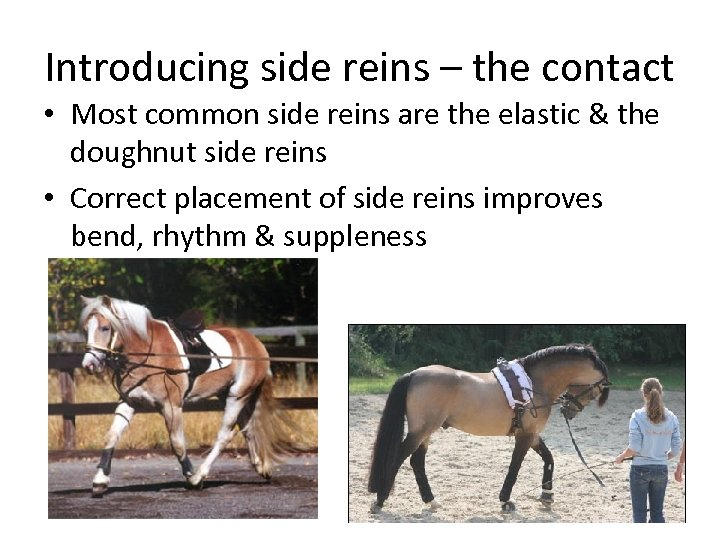 Introducing side reins – the contact • Most common side reins are the elastic