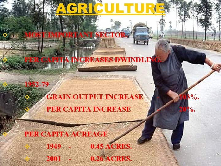 AGRICULTURE v MOST IMPORTANT SECTOR. v PER CAPITA INCREASES DWINDLING. v 1952 -79 v