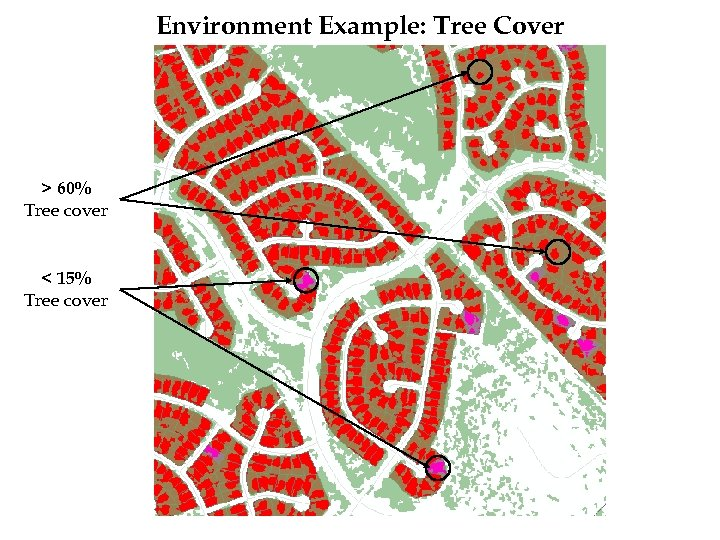 Environment Example: Tree Cover > 60% Tree cover < 15% Tree cover