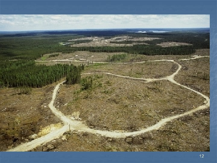 Canadian Boreal Forest 12