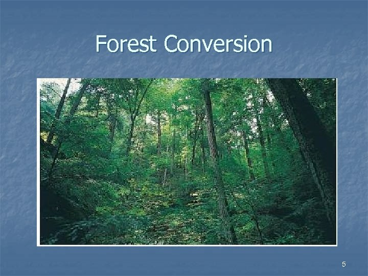 Forest Conversion 5