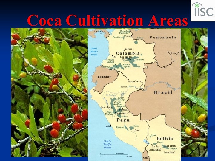 Coca Cultivation Areas
